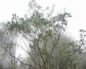 太平山翠峰湖:調整大小DSC_0471.JPG
