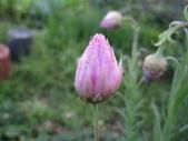 2011菜花園:IMG_5642_調整大小.JPG