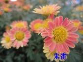 99士林官邸菊花展:IMG_1198朱雀.JPG