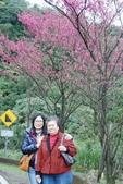 竹子湖:DSC_0072_調整大小_調整大小.JPG