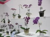 2011台北國際蘭展:IMG_6189_調整大小.JPG