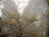 太平山翠峰湖山毛櫸步道:調整大小重新曝光DSC_1753.JPG