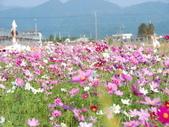太平山&見晴古道:調整大小DSC_0664.JPG