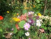 菜花園:調整大小103_1613.JPG