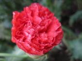 花博--春之花頌:IMG_6794_調整大小.JPG
