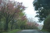 竹子湖:DSC_0087_調整大小_調整大小.JPG