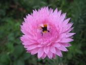 2011菜花園:IMG_6883_調整大小.JPG