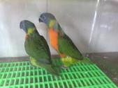 鳥:調整大小20081023135.jpg