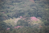 竹子湖:DSC_0156_調整大小_調整大小.JPG