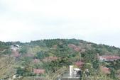 竹子湖:DSC_0097_調整大小_調整大小.JPG