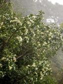 太平山翠峰湖山毛櫸步道:調整大小旋轉重新曝光DSC_1844.JPG