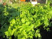 99-----菜花園:IMG_2763_調整大小