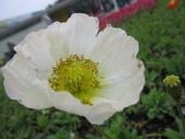 花博--春之花頌:IMG_6796_調整大小.JPG