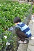 竹子湖:DSC_0111_調整大小_調整大小.JPG