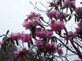 太平山翠峰湖山毛櫸步道:調整大小100_0889.JPG