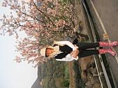 2011天元宮櫻花:IMG_7126.JPG