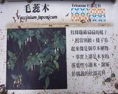 太平山翠峰湖:調整大小101_8715.JPG