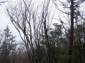 太平山翠峰湖山毛櫸步道:調整大小100_0786.JPG