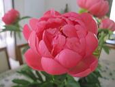 花見:IMG_9695