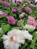 花博--春之花頌:IMG_7281_調整大小.JPG