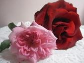 99---玫瑰:IMG_6058_調整大小