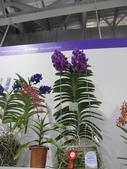 2011台北國際蘭展:IMG_6382_調整大小.JPG