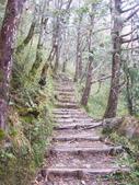太平山翠峰湖山毛櫸步道:調整大小100_0765.JPG