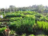 99-----菜花園:IMG_3165_調整大小