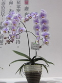 2011台北國際蘭展:IMG_6226_調整大小.JPG