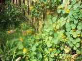 菜花園:調整大小103_1610.JPG