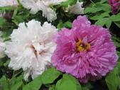 花博--春之花頌:IMG_7299_調整大小.JPG