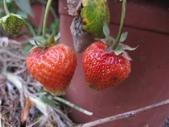 2011菜花園:IMG_8767.JPG