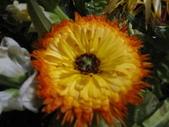 99---草花:IMG_3536_調整大小