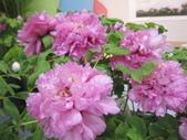 花博--春之花頌:IMG_7282_調整大小.JPG