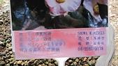 99新社花海:IMG_8776.JPG