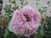 花博--春之花頌:IMG_6784_調整大小.JPG