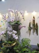 2011台北國際蘭展:IMG_6182_調整大小.JPG