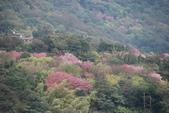 竹子湖:DSC_0039_調整大小_調整大小.JPG