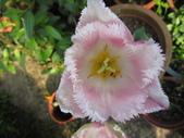 99-----菜花園:IMG_4552_調整大小.JPG