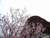99---櫻花林:調整大小DSC_0944