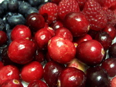Berry:調整大小101_8628.JPG