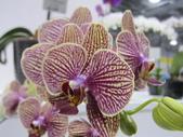 2011台北國際蘭展:IMG_6225_調整大小.JPG