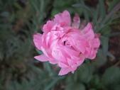 2011菜花園:IMG_7892_調整大小.JPG