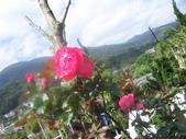菜花園:調整大小103_1597.JPG
