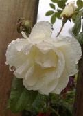 花球&草花:調整大小200903241147.jpg