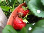 99-----菜花園:IMG_3871_調整大小