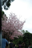 竹子湖:DSC_0034_調整大小_調整大小.JPG