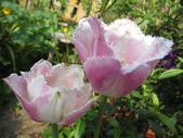 99-----菜花園:IMG_4508_調整大小