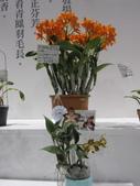 2011台北國際蘭展:IMG_6266_調整大小.JPG