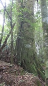 雪見森林遊憩區:IMG_9007.JPG